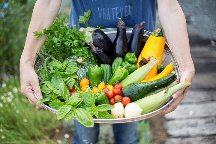 自家製夏野菜